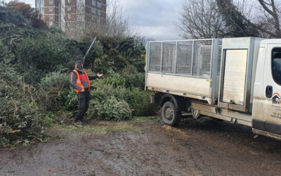 St Clare Hospice tree collection 2021