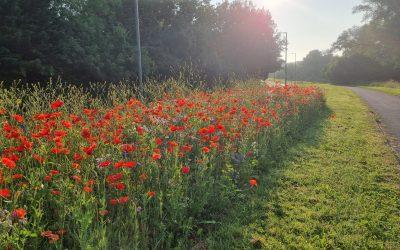 New wildflower verges are brightening up Harlow